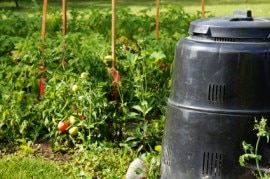 Compost bin and vegetable garden