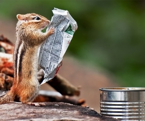 just-a-chipmunk-reading-a-nutrition-label