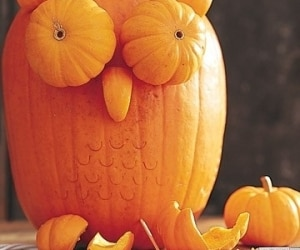 Pumpkin Owl Sourced Real