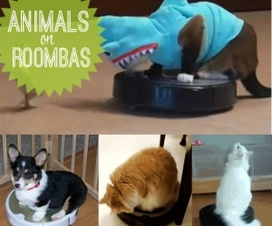 animals on roomba