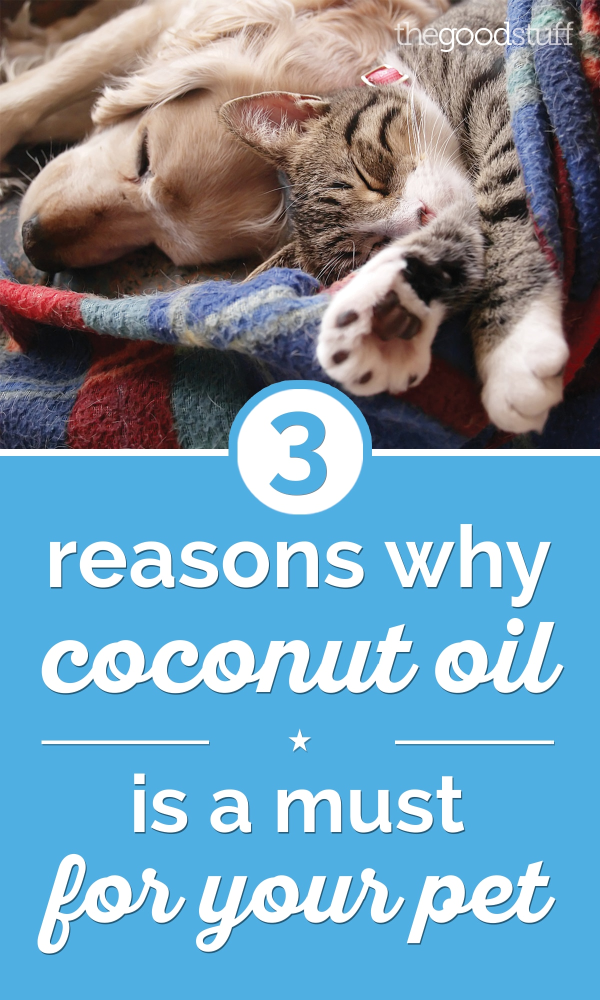 3 Reasons Why Coconut Oil for Dogs & Cats is Amazing | thegoodstuff