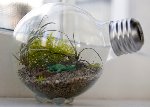 Reuse Old Light Bulbs_terrarium