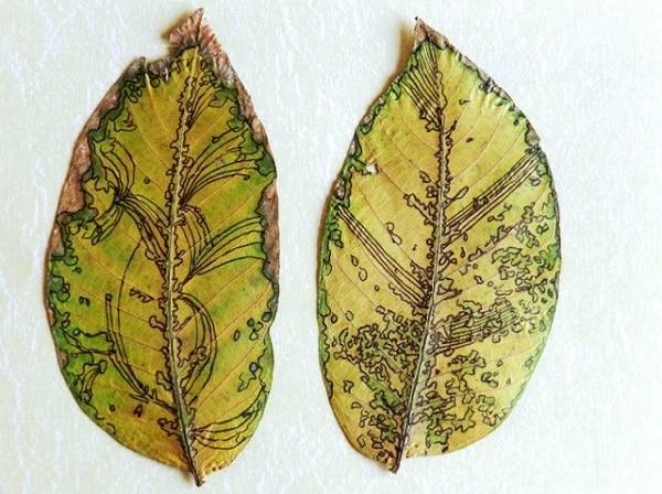Sharpie Leaves