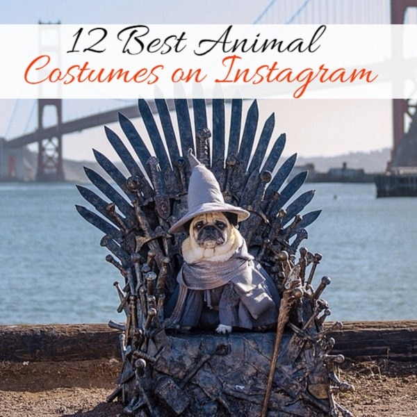 best animal costumes on instagram