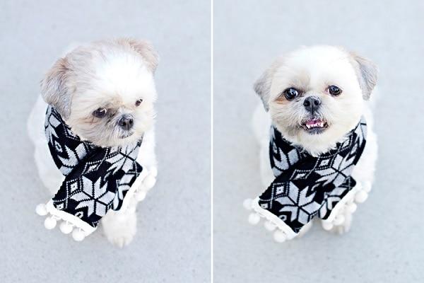 No Sew DIY Dog Pom Pom Scarf