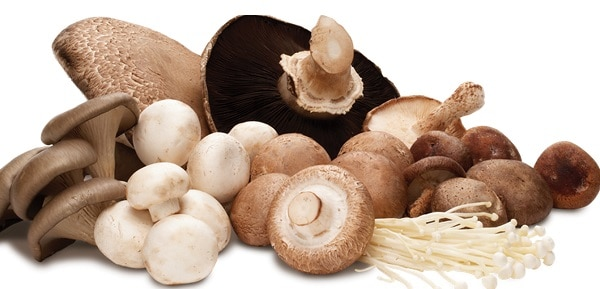 immunity mushrooms