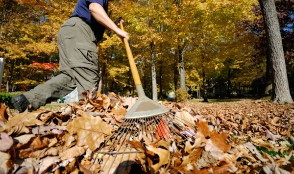 11 Tips Tricks And Tools For Easier Leaf Cleanup This