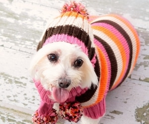Winter Pet Styles