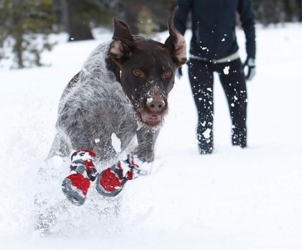 dog-snow-boots