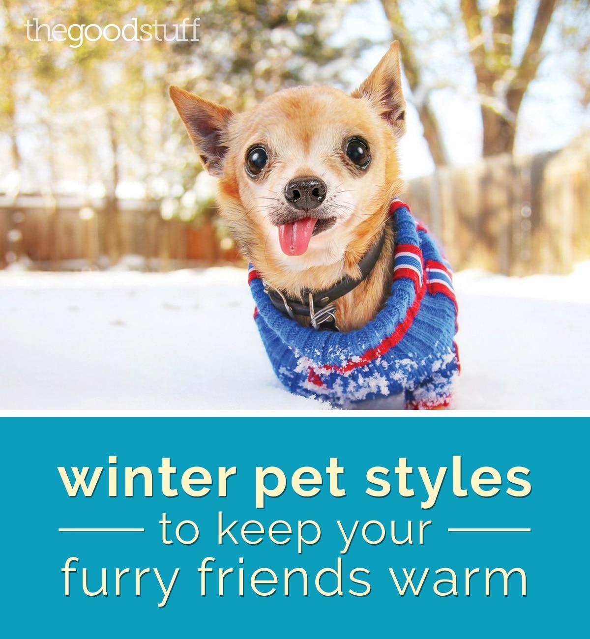 style-winter-pet-styles