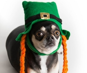 funny st patricks accessories featured