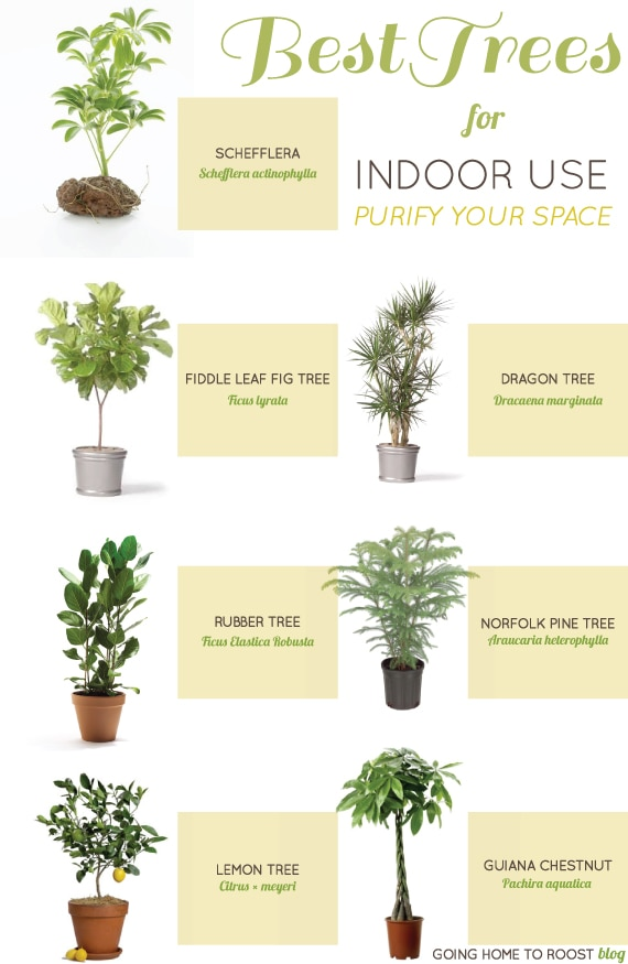 How to garden without a garden best indoor plants for Good plants to have indoors