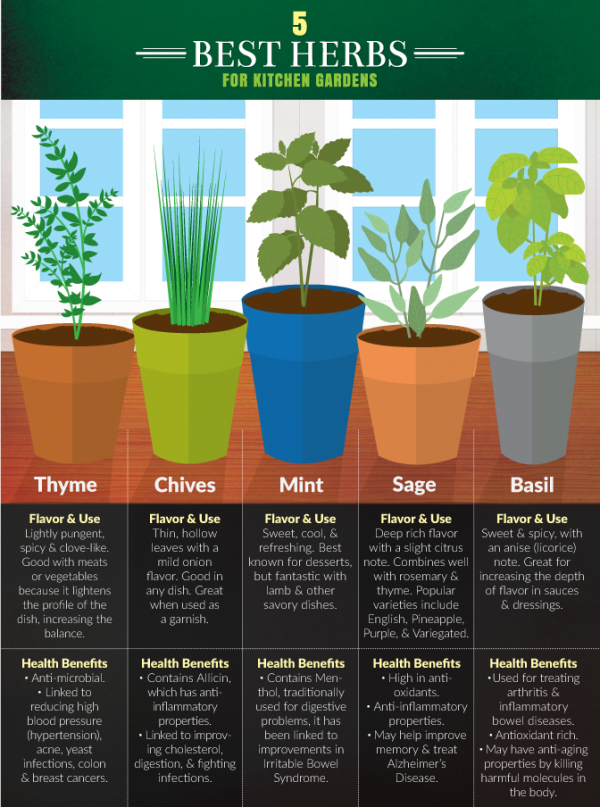 4 Herbs Graphic