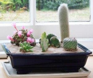 6 Indoor Desert Garden