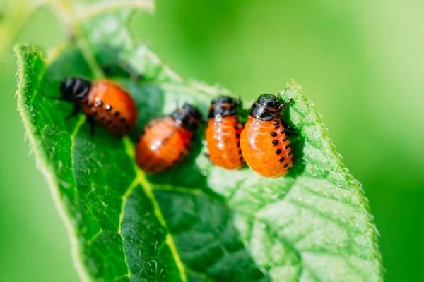 garden-pests