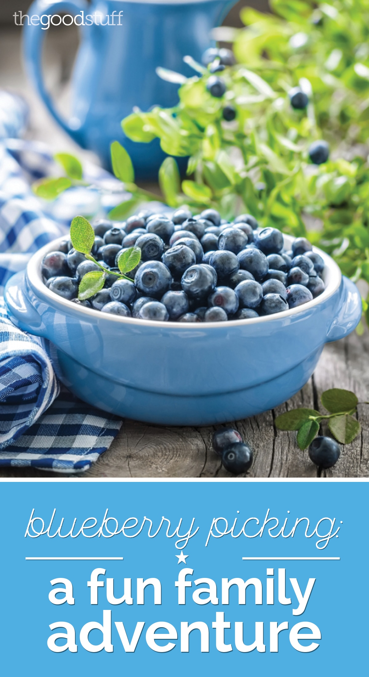 Blueberry Picking: A Fun Family Adventure | thegoodstuff