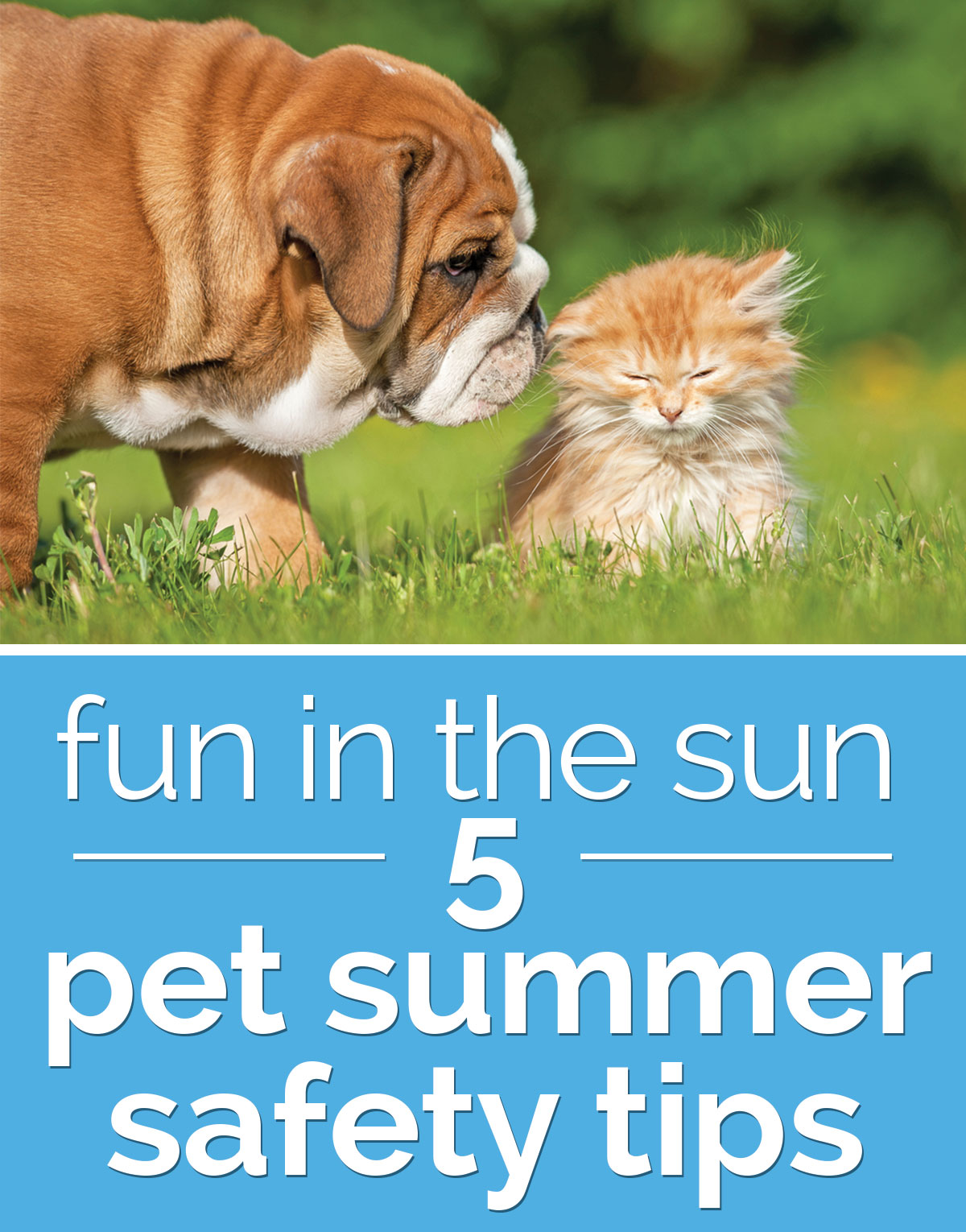 Fun in the Sun: 5 Pet Summer Safety Tips | thegoodstuff
