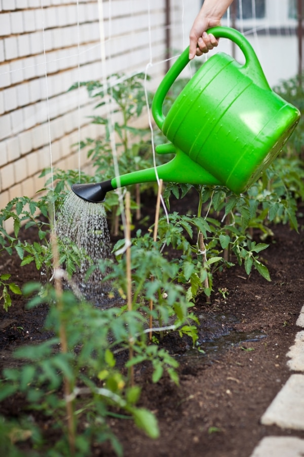 tips-for-growing-tomatoes_01