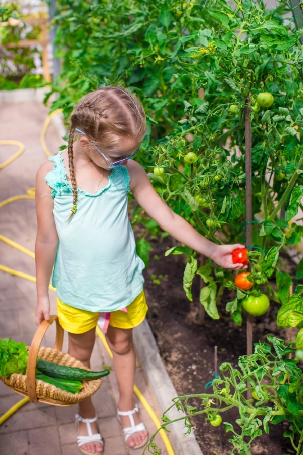 tips-for-growing-tomatoes_03