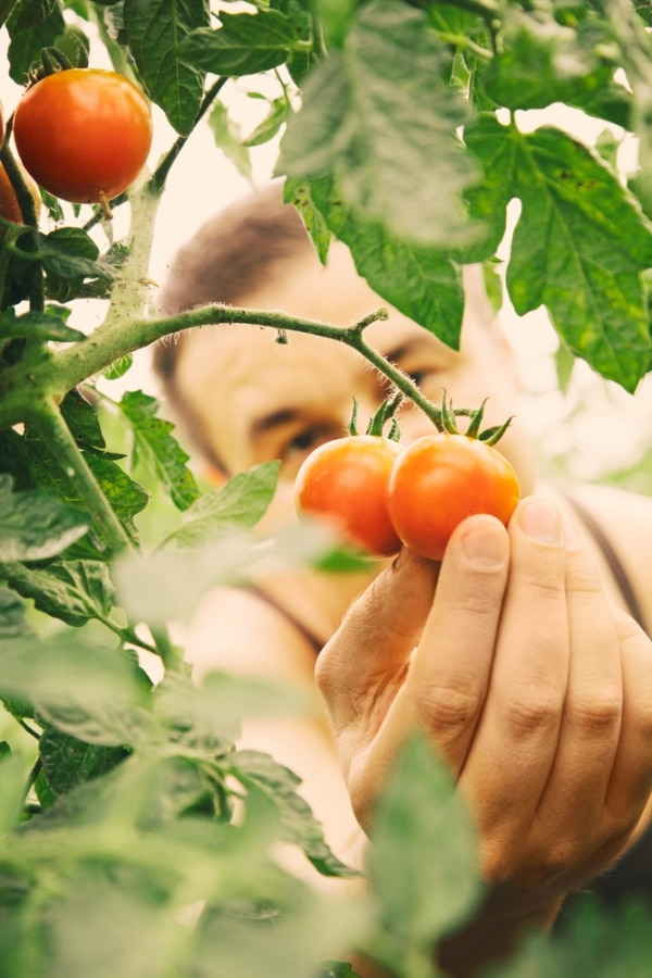 tips-for-growing-tomatoes_05