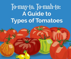 types-of-tomatoes_feat