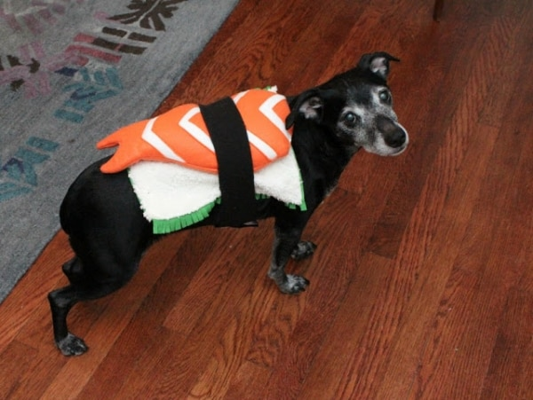 easy-diy-pet-costumes_03