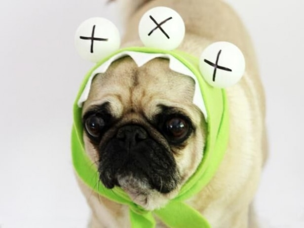 easy-diy-pet-costumes_10