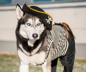 easy-diy-pet-costumes_feat