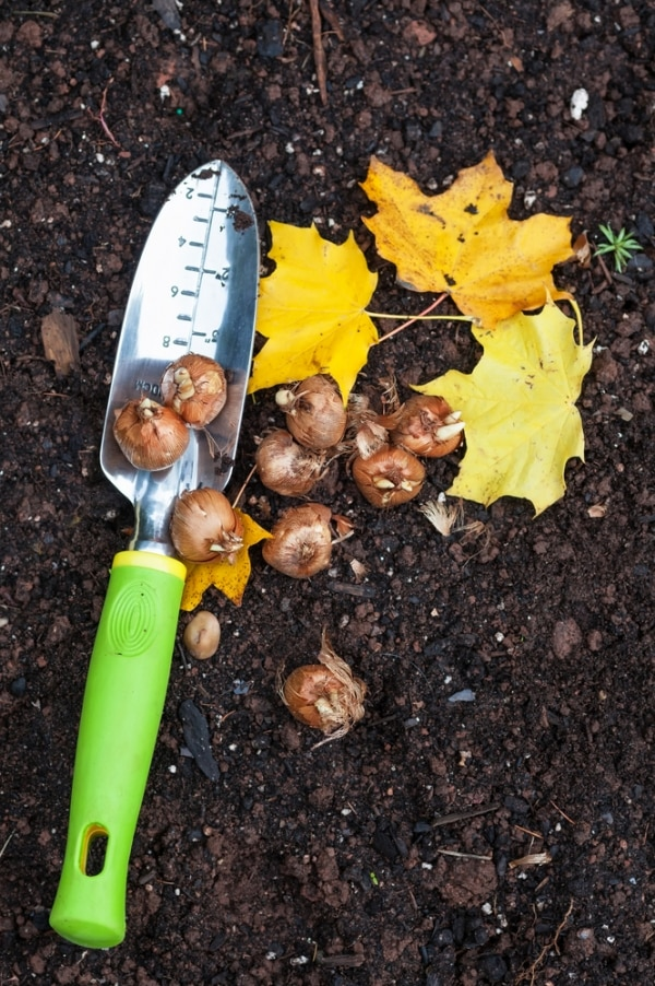 Fall Landscaping Tips get your yard ready with 8 fall landscaping tips - thegoodstuff