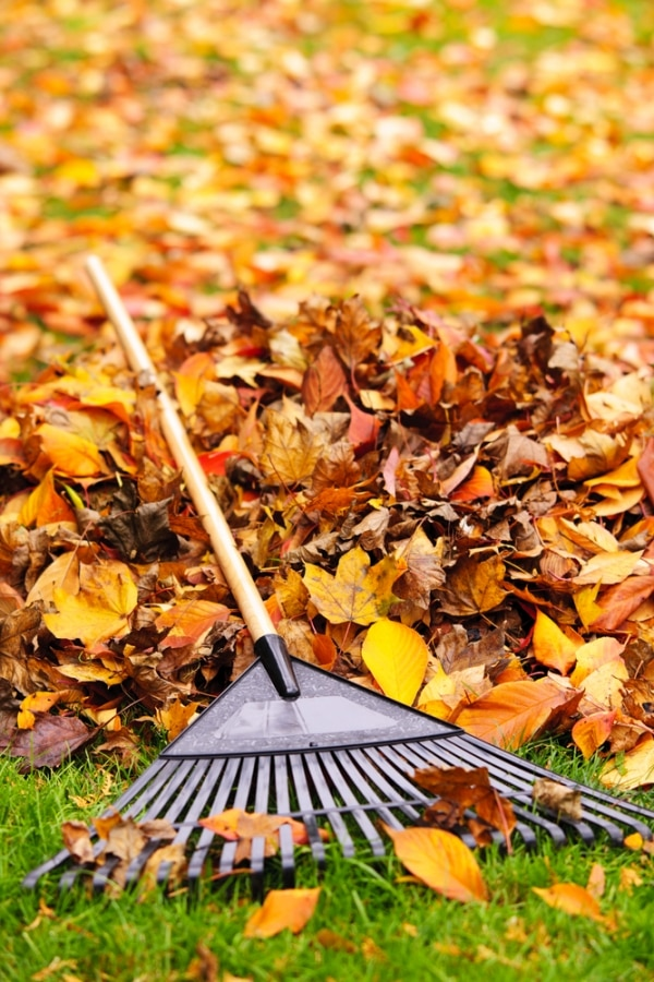 fall-landscaping-tips_06