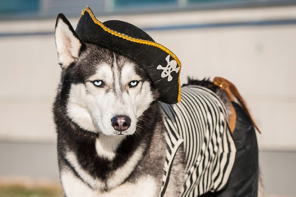 10 Fang-tastically Easy DIY Pet Costumes
