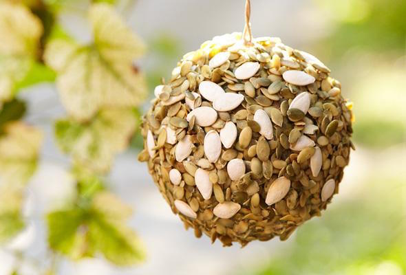 Surprising Uses for Pumpkin: Pumpkin Seed Bird Feeder | thegoodstuff