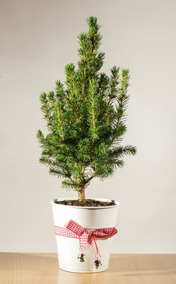 13 Christmas Tree Care Tips - thegoodstuff