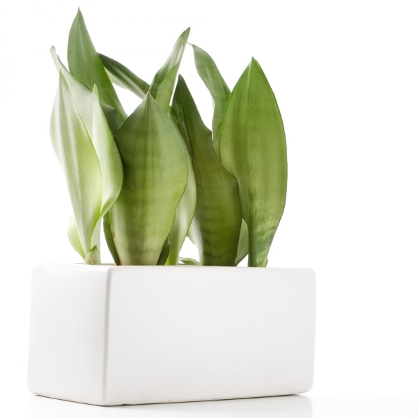 10 Easy Houseplants to Grow — Even With a Black Thumb!   thegoodstuff