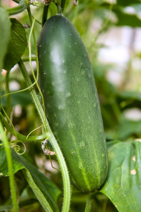 The Royal Kew: A Refreshing Garden Cucumber Cocktail | thegoodstuff