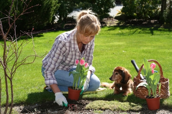 9 Tips for Keeping a Pet-Friendly Garden | thegoodstuff