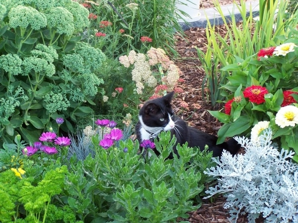 9 Tips for Keeping a Pet-Friendly Garden | thegoodstuff