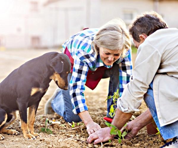 tips for keeping a pet friendly garden   thegoodstuff