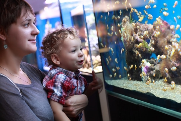 Finding Dory In Your Own Home: How to Build An Aquarium | thegoodstuff