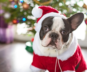 20 Delightful Pet Gift Ideas Your Four-Legged Pals Will Love | thegoodstuff