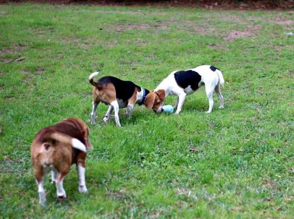 DIY Dog Toys | thegoodstuff