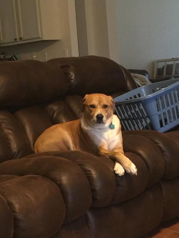 dog-laundry