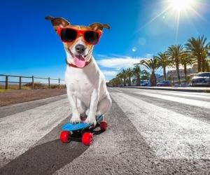 dog-summer1
