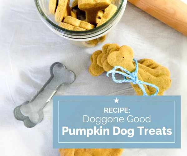 Recipe: Doggone Good Pumpkin Dog Treats | Coupons.com